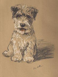 SEALYHAM TERRIER PUPPY ADORABLE RARE 1930's VINTAGE Art Print LUCY DAWSON mac Sealyham Terrier, Dog Artist, Dog Books, Vintage Art Prints, Vintage Dog, Cute Puppies, Dog Lovers, Corgi, Carnival