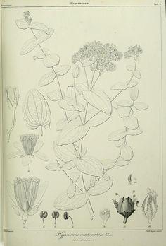 Phytographia canariensis /. Paris :Béthune,1836-1850.. biodiversitylibrary.org/page/28716292