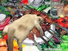Забавная подборка котоматриц с кулинарным уклоном, плюс видео