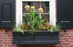 Black window box flower mix