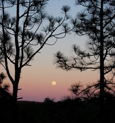 KISATCHIE NATIONAL FOREST....Alexandria, Louisiana....the only National forest in Louisiana....part of the Cenozoic uplands (some of Louisiana's oldest rocks).....one of the largest pieces of natural landscape in Louisiana....604,000 acres with more than half in vital longleaf pine and flatwoods....designated in 1930....rare animals include the Louisiana pine snake, the red-cockaded woodpecker, the Louisiana black bear and the Louisiana pearlshell mussel