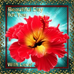 July Flowers! Send this beautiful flower to anyone & wish them a beautiful day too! Permalink : http://www.123greetings.com/events/flower_of_july/beautiful_day_for_you.html