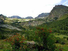 Serbales en fruto, Valle de Estós. Localización: Pirineos, Huesca, Aragón, España. Spain.