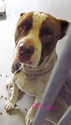 Killed 1/5/15- Baldwin Park CA - Please Support Your Local Shelter Animals