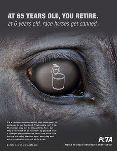 Race horses get slaughtered abroad and come back here as dog food. This isn't how they deserve to live and die.