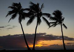 hawaii_2012-13