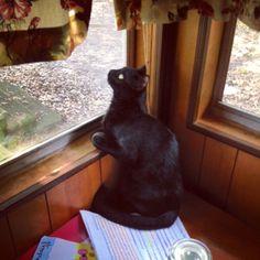 His favorite spot :3 #black #cat # kitten #kitty #babyboy #blackcat #blackkitty #blackkitten #yelloweyes