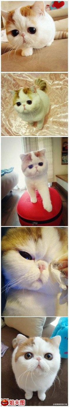 This is the only kind of cat, that I would ever want...<3