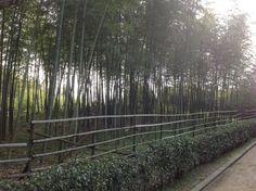 한참 걷다가 만난 대나무 숲. in 다이센 공원.