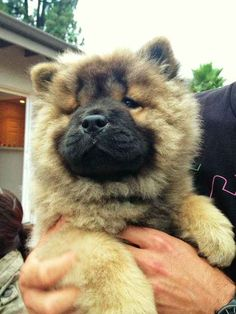 27 Puppies Who Are Too Fluffy For Their Own Good