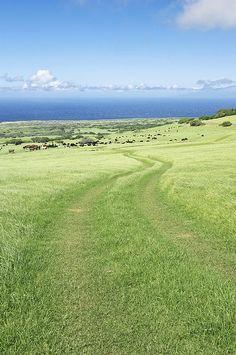 Kohala Horse Ranch By Rob Tilley, Big Island