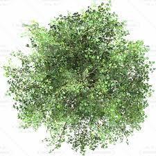 Bildergebnis für trees top view