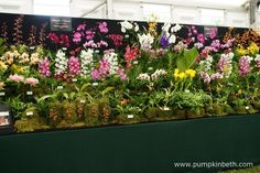 A beautiful display of orchids from Burnham Nurseries, a family run nursery, based in South Devon, England.