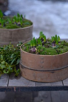 hyacint-i-korg Christmas Greenery, Christmas Flowers, Wooden Planters, Planter Pots, Natural Christmas, Plantation, European Style, Winter Time, Natural Materials