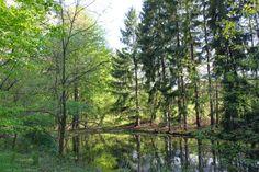 Sahli Pond in May