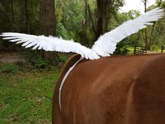 White Riding Horse Wings -- Feathered Wings for Horse Pony or Miniature Horse Pegasus Equine Angel Horse Costume (54.00 USD) by MyBuddyBling