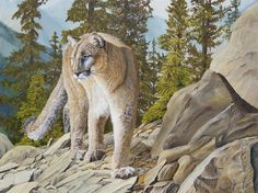 Giclee fine art paper and canvas prints from my original oil painting of a cougar high in a mountain range as something has caught her attention by Johanna Lerwick Wildlife / Nature Artist. Nature Artists, Mountain Lion, Wildlife Nature, Realism Art, Nature Paintings, Paintings For Sale, Wood Art, Buy Art, Fine Art America