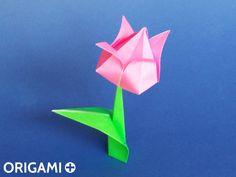 Tulip - step 1