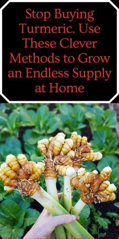 Growing Herbs, Growing Vegetables, Gardening For Beginners, Gardening Tips, Medicinal Plants, Garden Planning, Garden Projects, Organic Gardening, Organic Horticulture