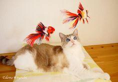 My cat and my goldfises! https://www.etsy.com/listing/221418704/needle-felted-goldfishcalico-oranda?ref=shop_home_active_5