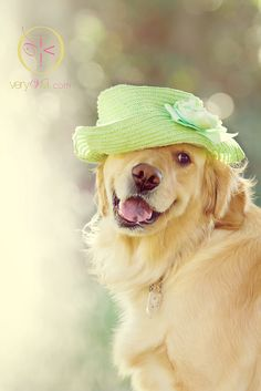 A New Hat! ....adorable