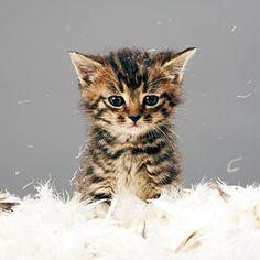 liten katt!
