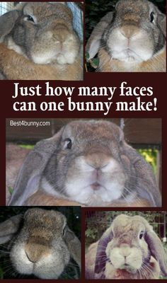 Just how many faces can one bunny make?
