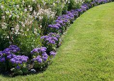 Miten ja milloin kylvän nurmikon? Entä miten tehdään nurmikon lannoitus? Viherpihan ohjeilla saat kauniin ja kestävän pihanurmikon.
