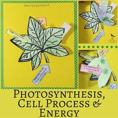 Help your students describe where plants get the energy needed to produce food in this engaging activity found in Photosynthesis, Cell Process and Energy: Life Science Interactive Notebook