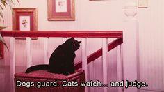 Oye, los perros cuidan. Los gatos vigilamos... y juzgamos