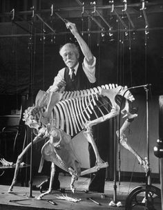 Nina Leen  Dr. S.H. Chubb, Osteologist at the American Museum of Natural History, adjusting a wire brace on the skeleton of a small donkey, November 1944
