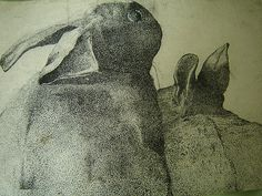 Hare pen and ink drawing of hares mara ceramics