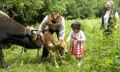 Cow, Animals, Cabin, Animales, Animaux, Animal Memes, Animal, Animais, Dieren