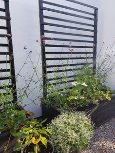 Arkitektens Trädgård - landskapsarkitekt - trädgårdsälskare - trädgårdsblogg Trellis, Pergola, Outdoor Structures, Plants, Gardening, Ideas, Style, Swag, Garden