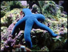 starfish | ... starfish, he reached down and tossed the beached starfish back into