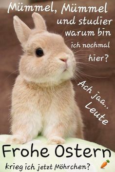 Bilder Ostern – Bilder Ostern – # … - Frohe Ostern an alle! Funny Friday Memes, Friday Humor, Funny Memes, Humor Mexicano, Easter Bunny Pictures, Bunny Images, Easter Games, Christmas Ad, Easter Printables