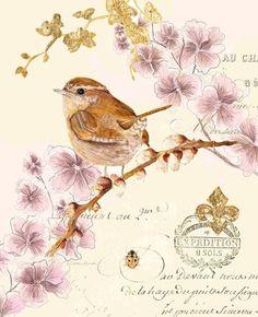 "syflove: "" bird "" Art"