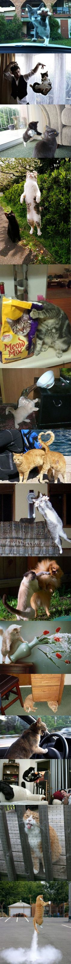 && more cats!!