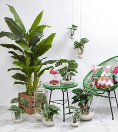 Tropical Bird Life: Amalfi's New Outdoor Decor Interior Tropical, Tropical Outdoor Decor, Tropical Furniture, Tropical Home Decor, Tropical Colors, Tropical Style, Tropical Birds, Tropical Houses, Tropical Plants