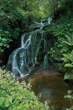 #Cantabria #SajaNansa  #Nature #Forest #Spain