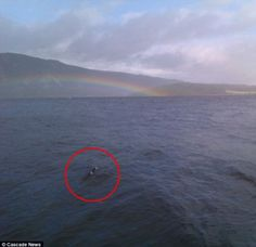 This image from 2011 shows a pair of humps which soon disappeared under the waves of Loch Ness