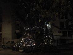 Comenzó la navidad.