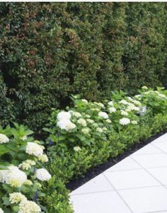 Clean and elegant New Zealand garden. Love the hydrangeas as hedge and the diamond cut concrete.