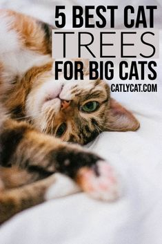 If you have a large cat, then it can be challenging to find an appropriate size cat tree for them. We've picked the 5 best cat trees for large cats. Cool Cat Trees, Cool Cats, Small Cat Tree, Cat Products, Cat Condo, Dog Pin, Cat Behavior, Cat Treats, Cat Health