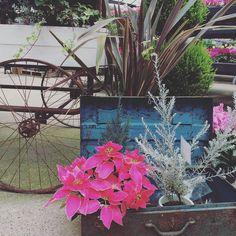#thefarmuniversal 植物アプリの決定版 http://greensnap.jp  #寄せ植え #植物好きと繋がりたい  #ボタニカル#ドライフラワー #多肉#多肉植物#多肉バカ同盟 #観葉植物 #ガーデニング #グリーンインテリア #園芸 #フラワー #花のある暮らし  #succulents #cactus#gardening #containergarden #flowerstagram #greenthumb #greenlife #containergarden #botanical#珍奇植物 #サボテン #ユーフォルビア #thefarm #根塊植物