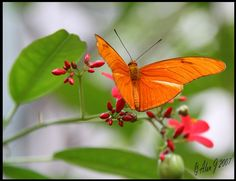 ~~Sunshine,Freedom and a Little Flower by alanj2007~~