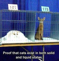 Cats #funnypics #funny #lol