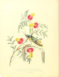 https://flic.kr/p/bsdvbG | n365_w1150 | Oriental memoirs :. London :Printed for the author by T. Bensley :1813.. biodiversitylibrary.org/page/37016412