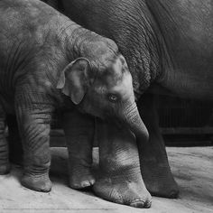 leave me mama - kujaja jaja Baby Animals, Cute Animals, Elephants Never Forget, Elephant Illustration, Animal Medicine, Photo To Art, Elephant Love, Beautiful World, Beautiful Places