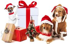 TOP 10 GREAT DOG GIFTS FOR CHRISTMAS! 2016